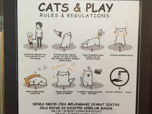 cat play_pet store