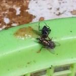 house fly diy