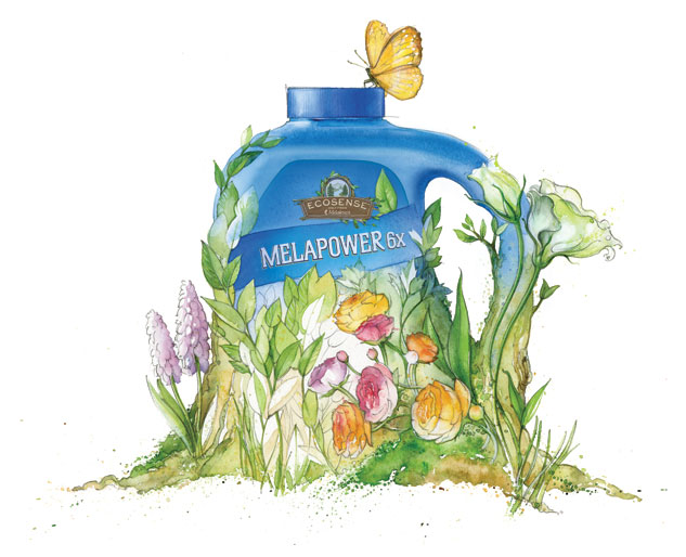 A Melaleuca graphic for MelaPower