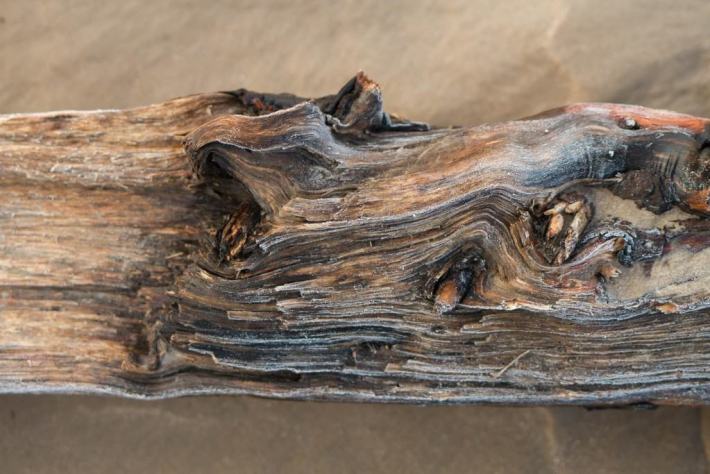 Driftwood, Tentsmuir beach, Fife, Scotland