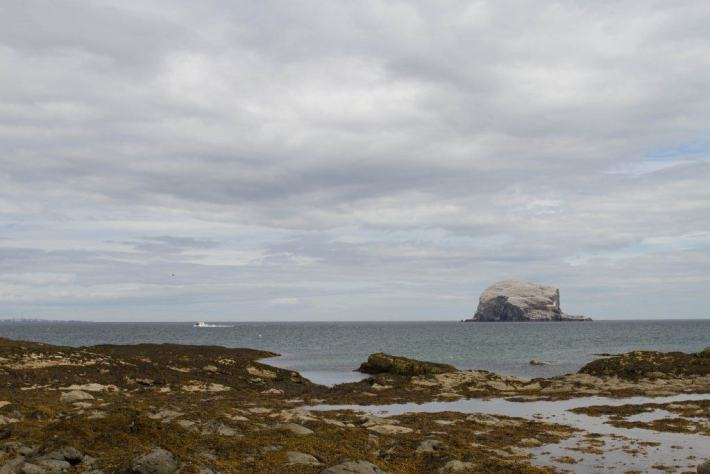 Bass Rock, North Berwick, Scotland Travel Guide