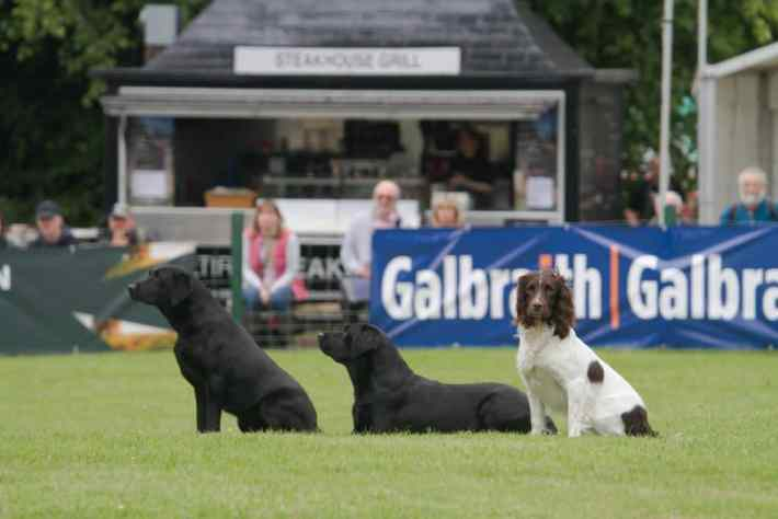 Scottish Game Fair, Perth, Scotland Travel Tips