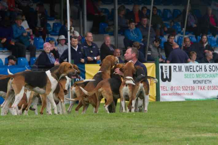 Scottish Game Fair, Perth, Scotland