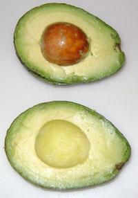 avocado-halves1
