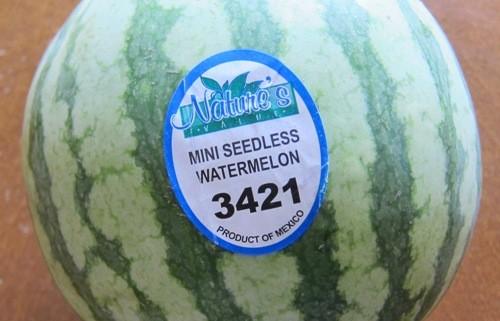 personal seedless small mini watermelon