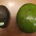giant avocado next to regular avocado