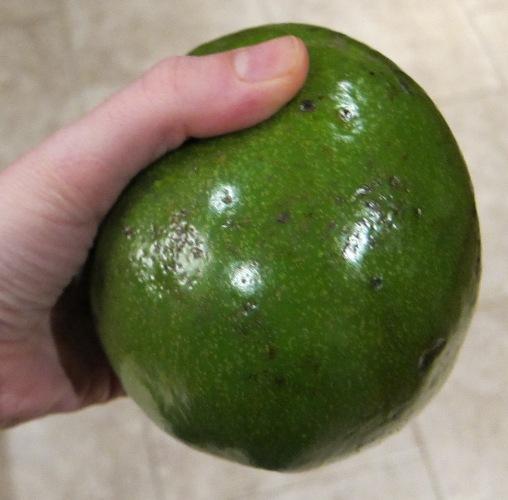 hand holding a giant avocado