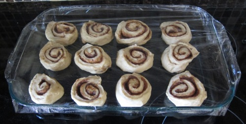 cinnamon rolls rising in a baking dish covered by the plastic wrap