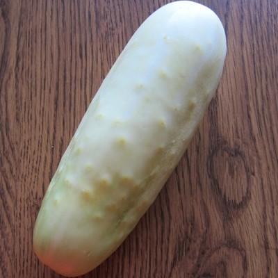 white cucumber