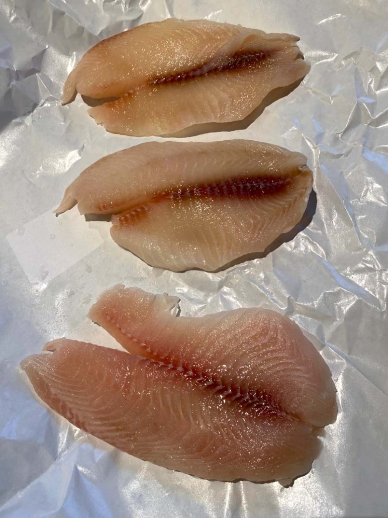 prepping raw tilapia fillets
