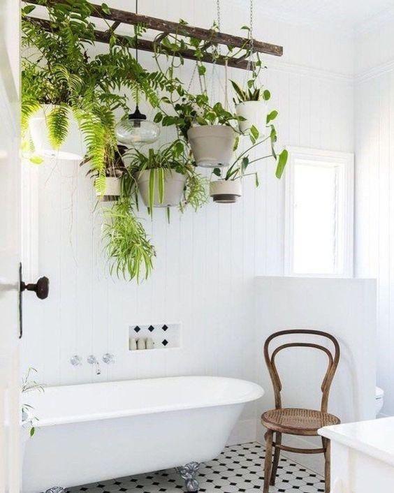 hanging plants, bathroom