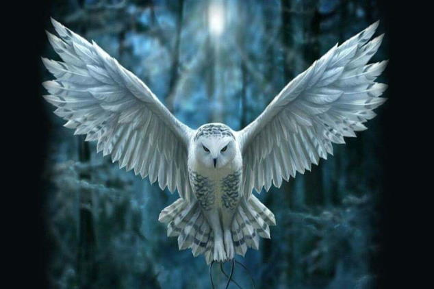 Owl in flight representing spiritual development workshops