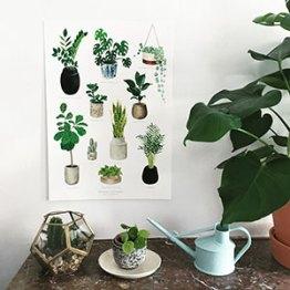"""Affiche """"belles plantes"""""""