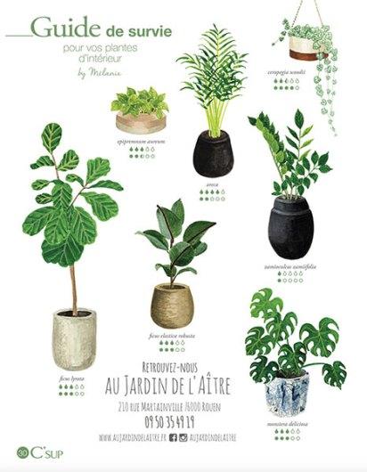 page-plantes-CSUP6