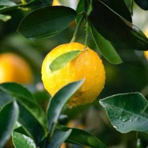 horticulture-fruit-produce.jpg 3