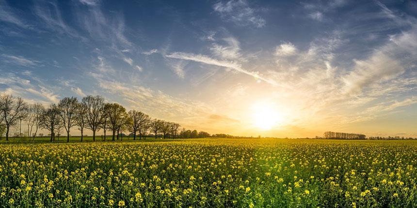 Un prado verde con el sol de fondo reflejando el desarrollo sostenible de las energías renovables en España
