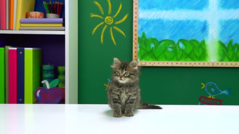 melissa-judson-cats-kids-react-set-design-friskies-fine-bros