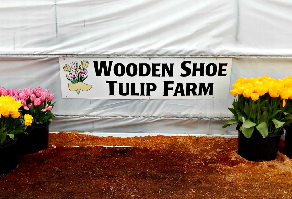 woodburn-tulip-festival-35