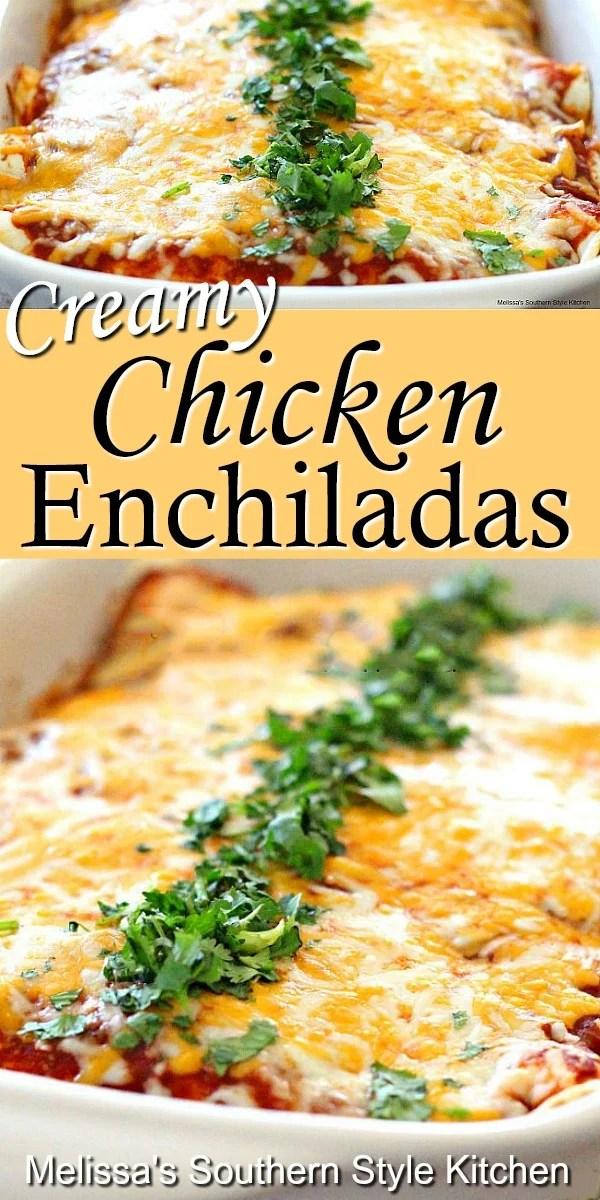 Enjoy a homestyle fiesta with these Creamy Chicken Enchiladas #chickenenchiladas #chickenrecipes #enchiladas #chicken #mexicanfood #southernrecipes #dinnerideas #dinner #southernfood