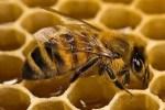 €5.600 για το πρόγραμμα βελτίωσης παραγωγής και εμπορίας προϊόντων μελισσοκομίας έτους 2010