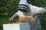 Σεμινάρια μελισσοκομίας από το ΑΠΘ