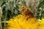 «Οι μέλισσες αγαπούν τα βιολογικά» – Καμπάνια ευαισθητοποίησης από ολλανδική εταιρεία