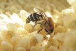 Οι ψεκασμοί των φοινικοειδών αποδεκατίζουν τα μελίσσια