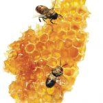 «10η Γιορτή Βιοκαλλιεργητών -Αφιέρωμα στη Μελισσοκομία, Αναζητώντας τις χαμένες γεύσεις»