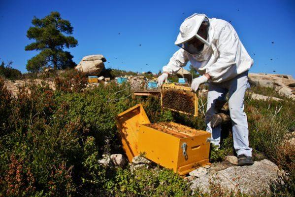 Ασθένειες και εχθροί των μελισσών