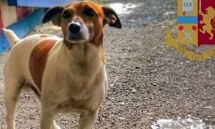 Salviamo il piccolo Pocho, il cane antidroga nemico della Camorra
