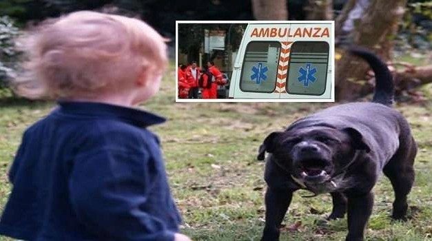 Arzano, un cane aggredisce una bambina