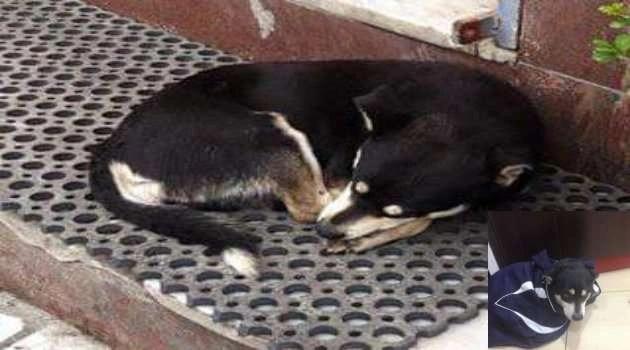 Melito. Manifestazione contro il maltrattamento degli animali