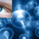 Nuove scoperte con le cellule staminali