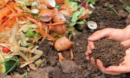 Come riciclare i rifiuti umidi? Ecco un'idea per chi ha buona volontà