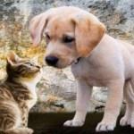 Mugnano. Regolamento aree cani e importanti variazioni di bilancio