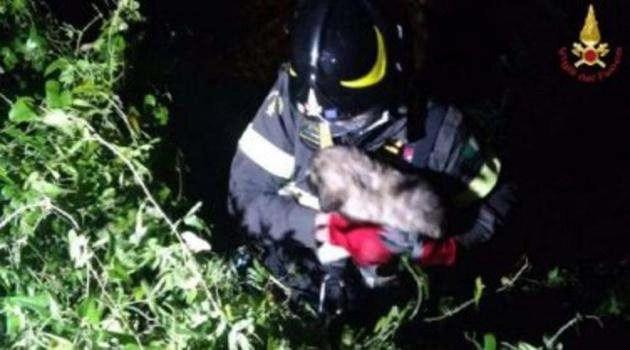 Benevento: Vigili del Fuoco recuperano due cuccioli in un dirupo