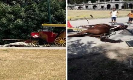 Muore un cavallo alla Reggia di Caserta