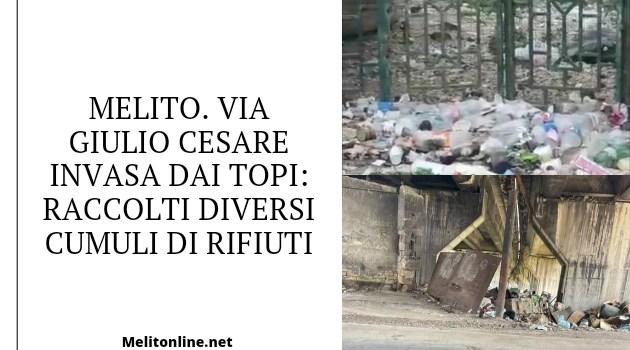 Melito. Via Giulio Cesare invasa dai topi: raccolti diversi cumuli di rifiuti