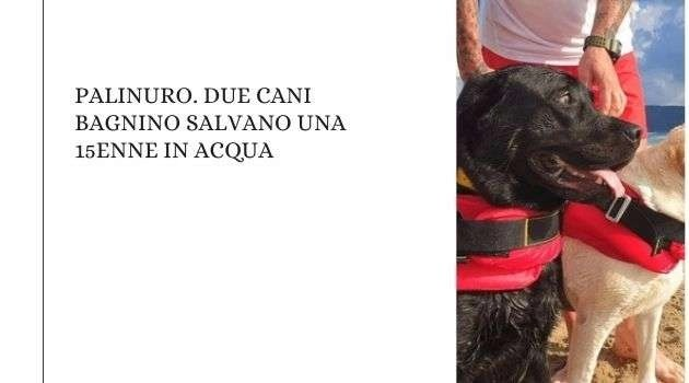 Palinuro. Due cani bagnino salvano una 15enne in acqua