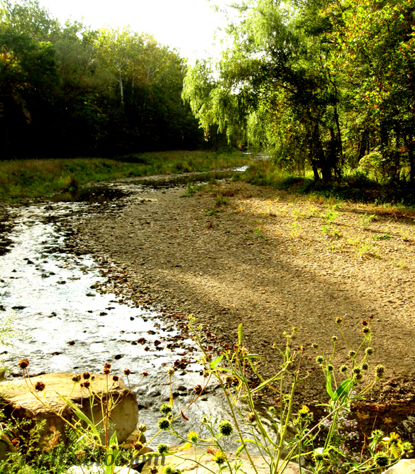 Dog Days of Summer - drying river