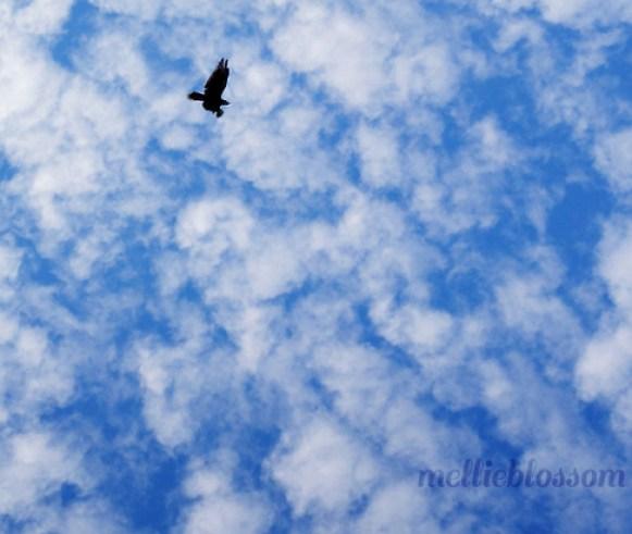 Dog Days of Summer - hawk