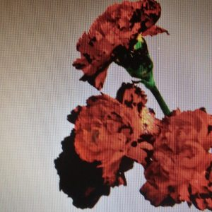 "Cover ""Love In The Future"" John Legend"