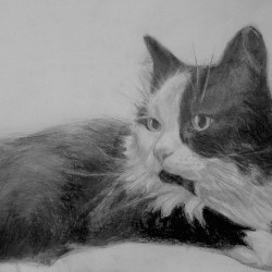 "Minnoe, 2011, Graphite Pencil Drawing on Paper, 9""x12"""