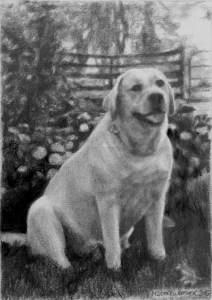mstarkweather_ben_goldenlab_petdrawing_sm