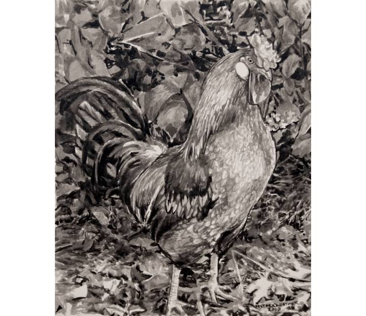 "Icelandic Rooster, 2020, Ink Painting on Paper, 8"" x 10"""