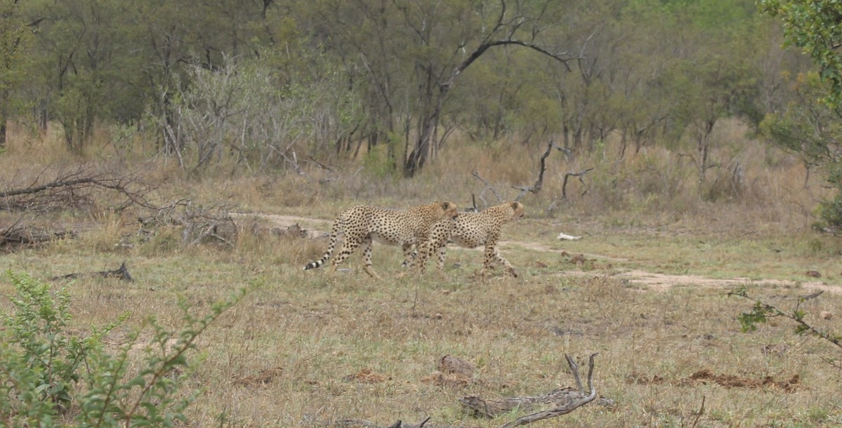 Spotting the Big Five in Kruger Park