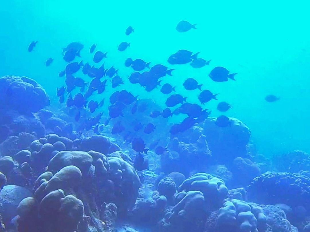 Why Bonaire Is A Diver's Paradise