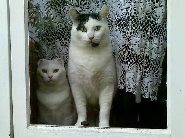 mr bell and loki in the window