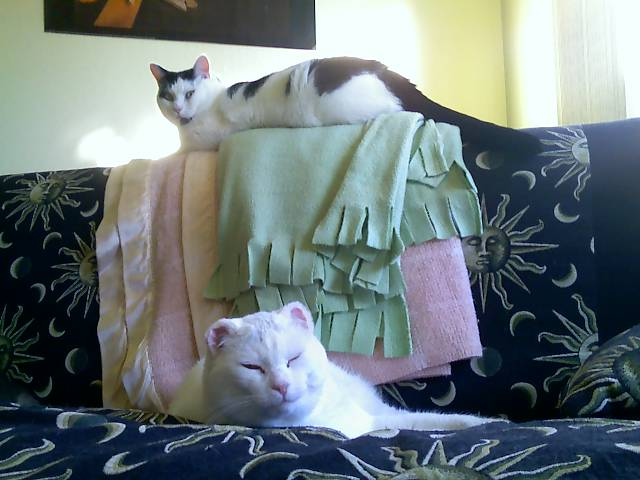 loki and mr bell on the couch