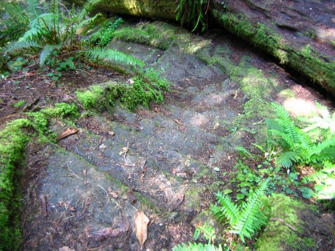 stone stairs at Fern Canyon